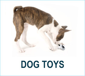 Check out our dog toys!