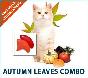 The leaves change, the seasons move on, and our cats love to take it all in, just like we do. A touch of fall color on their nails will have them flitting around like lovely falling leaves.