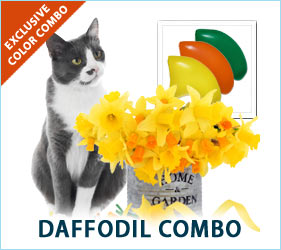 Your cat will look purrdy in our vibrant daffodil ensemble this spring.