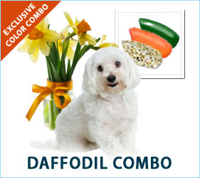 Define your doggies by fashioning them with our unique collection of spring daffodil florals.