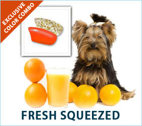 Cold orange juice on the deck is a great way to start a summer morning. Your dog will look as refreshed and cool as your morning juice in our Fresh Squeezed Combo.