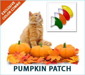 Check out our fabulous Pumpkin Patch combo for cats!