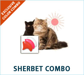 Your cat will look refreshed, colorful, and relaxed in our Sherbet Combo.