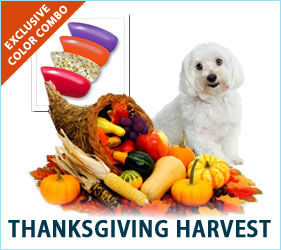 Check out our Thanksgiving Harvest combo for dogs!