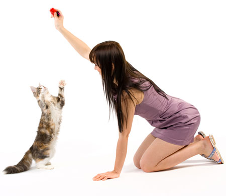 Avoid these four common cat training mistakes.