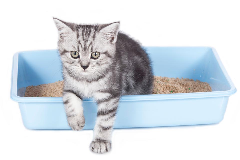 Learn some tips for cleaning the litter box.