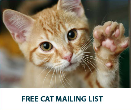 Sign Up for the Free Soft Paws Cat Mailing List