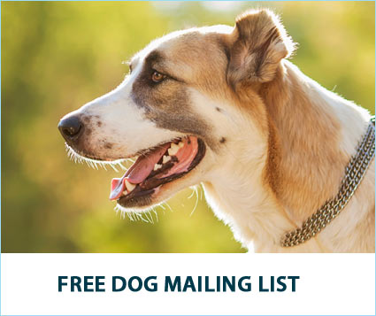 Sign Up for the Free Soft Paws Dog Mailing List