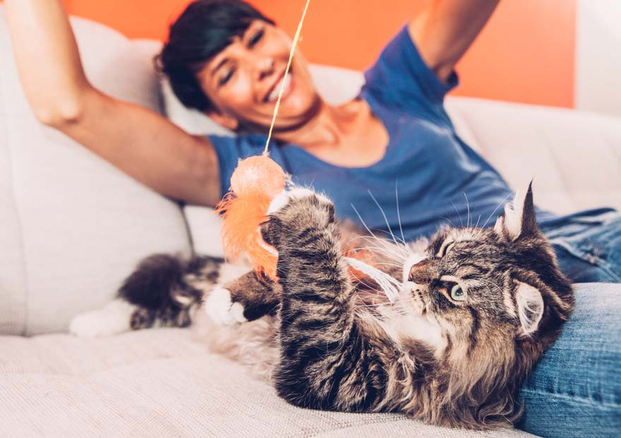 Interactive play keeps cats healthy and happy.