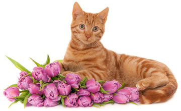 Kitty Cat April/May Color Combos