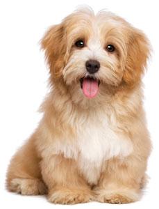 Puppy Dog May/June Combos