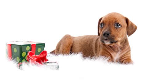 Puppy Dog November/December Combos