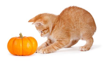 Kitty Cat September/October Combos