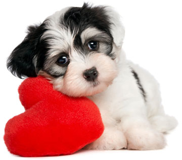 Puppy Dog Valentine Combos