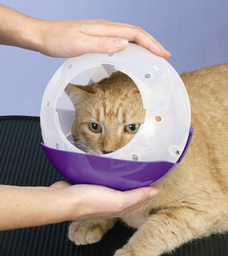 how to break a cat from biting