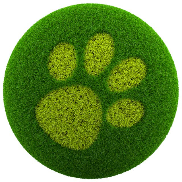 Green up your pet care routine for a healthier environment.