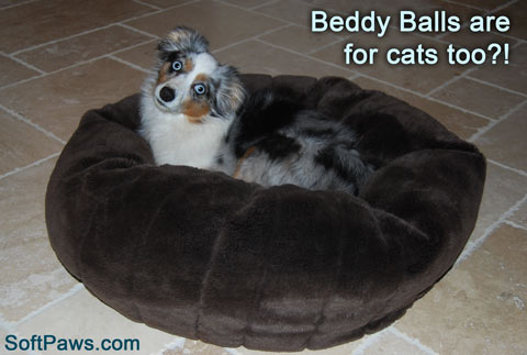 Dogs and cats alike are in love with the cozy beddy ball