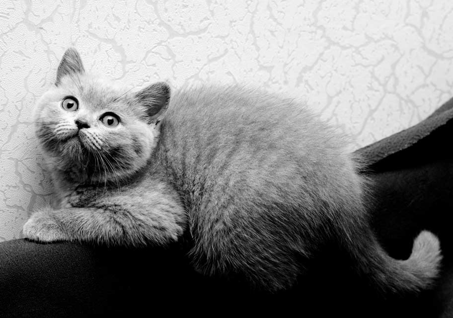 Stress can cause negative behaviors in cats.