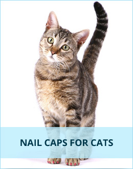 Nail Caps for Cats