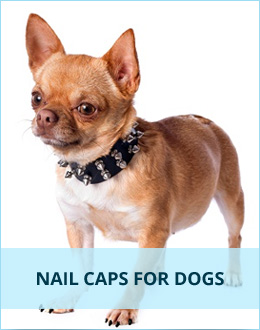 Nail Caps for Dogs